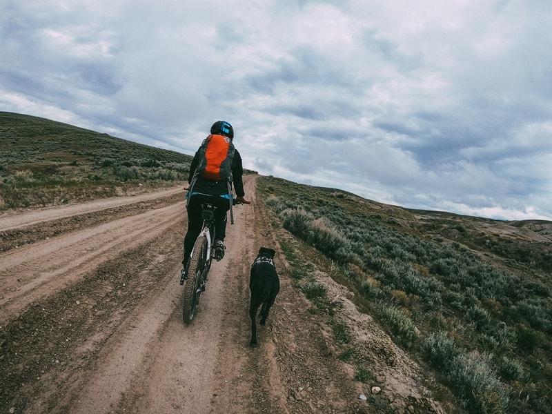 jazda z psem na rowerze